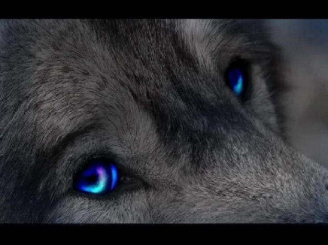 Wolf Bite